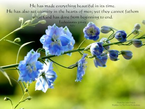Ecclesiastes 3:11-12 – Everything  Beautiful Wallpaper
