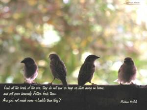 Matthew 6:26 – More Valuable Wallpaper