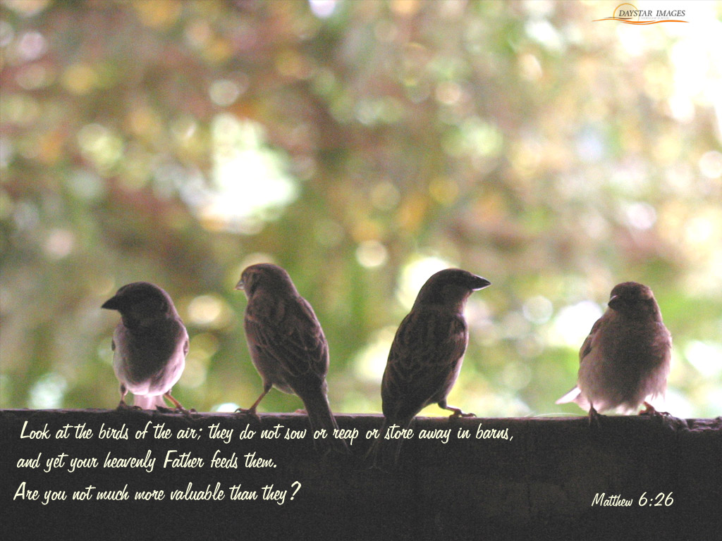 Matthew 6:26 – More Valuable christian wallpaper free download. Use on PC, Mac, Android, iPhone or any device you like.