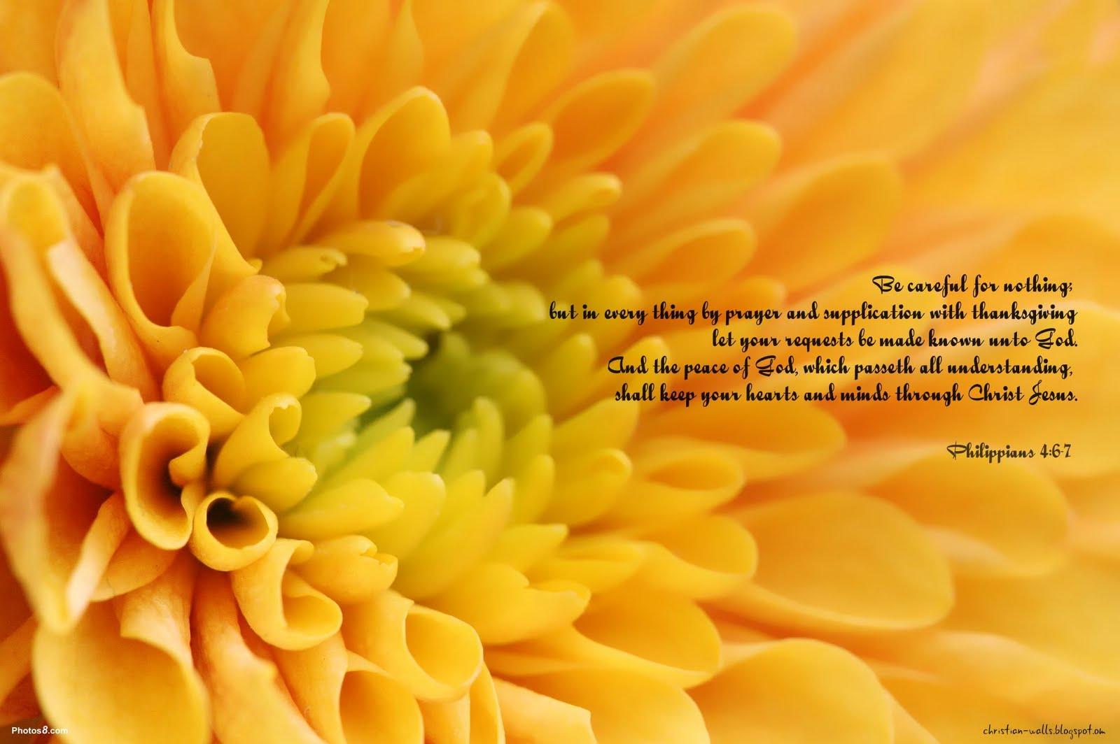 Philippians 46 7