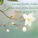 Proverbs 15:5 – Father's Discipline Wallpaper Christian Background