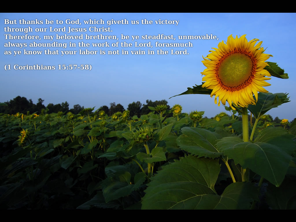 1 Corinthians 155758 NIV  Bible Study Tools