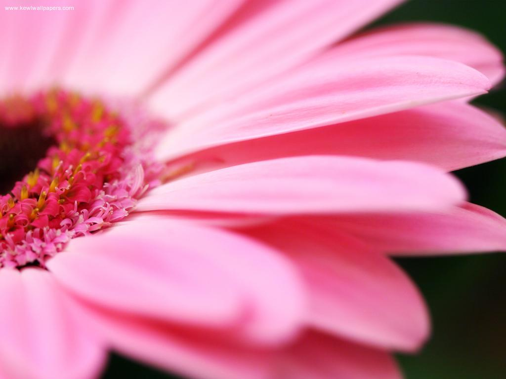 Amazing Pink Flower Wallpaper Christian Wallpapers And Backgrounds
