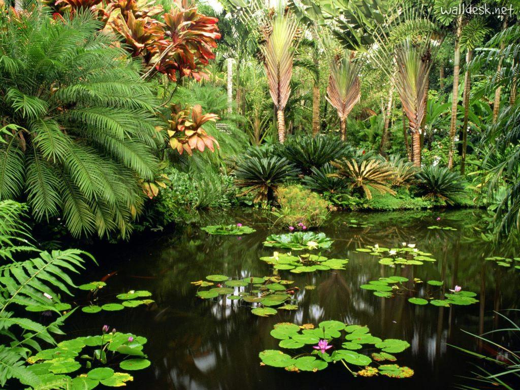 Hawaii Tropical Botanical Garden Hawaii Tropical Botanical