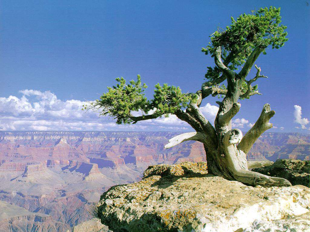 Amazing Wallpaper Mac Grand Canyon - grand-canyon-tree_1511_1024x768  Pic_515443.jpg