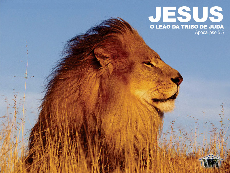 Lion Of Judah Wallpaper Christian Wallpapers And Backgrounds