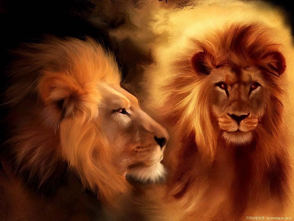 Cool Lion Wallpapers GRS Desktop