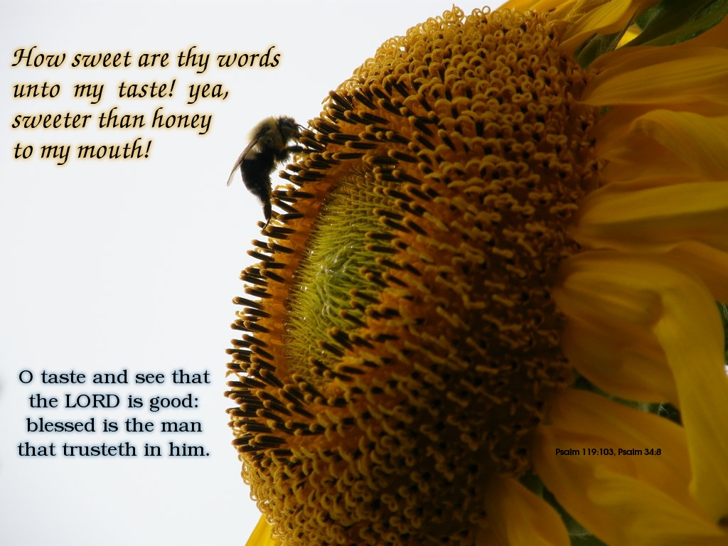 Psalm 119:103 & 34...