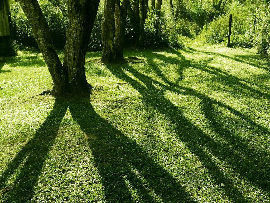 Shadows & Tree Wal...